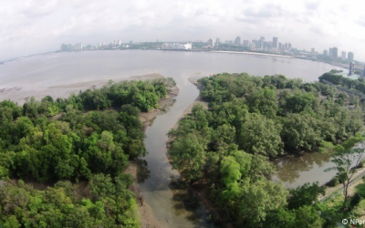 FEASIBILITY STUDIES AT MANDAI MANGROVES AND MUDFLAT