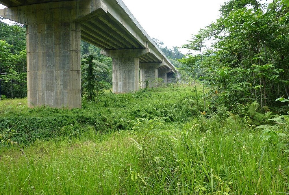 EIS AND EMMP FOR A ROAD CORRIDOR (VIADUCT) PROJECT IN SINGAPORE