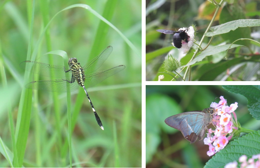 BIODIVERSITY IMPACT ASSESSMENT (BIA) IN PUNGGOL NORTH